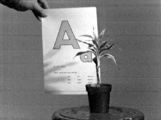 baldessari_plant_alphabet.jpg
