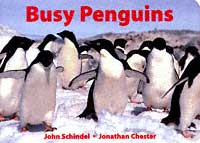 busy_penguins.jpg