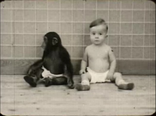 chimp_baby_film1.jpg