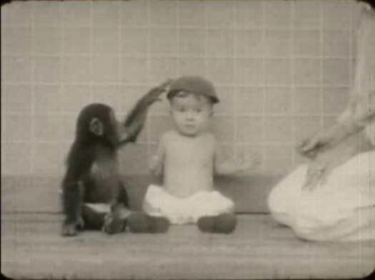 chimp_baby_film2.jpg