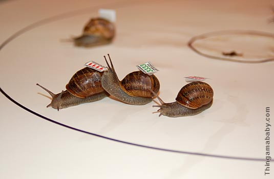 snails_three_run.jpg