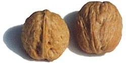 two_walnuts.jpg