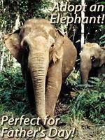 wwf_adopt_an_elephant.jpg