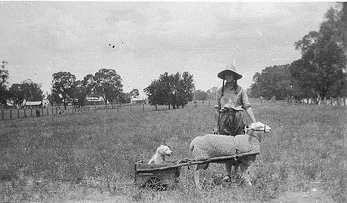 yapyap_sheep_cart_nsw.jpg