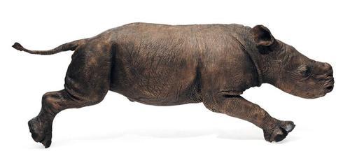 pba_baby_rhino.jpg